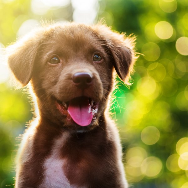 Kaj pove pasma psa o vas?