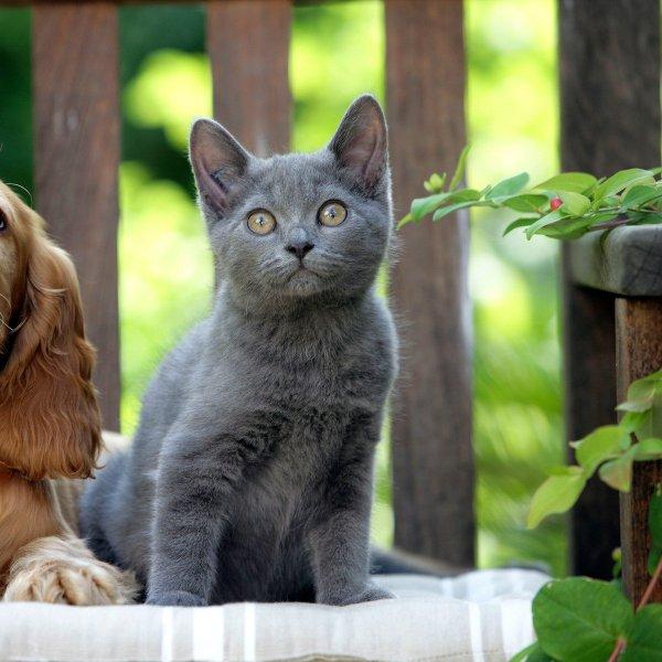 Kaj je skupnega ljubiteljem mačk in ljubiteljem psov?