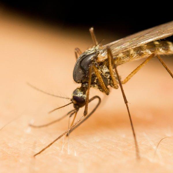 Triki, ki odganjajo komarje