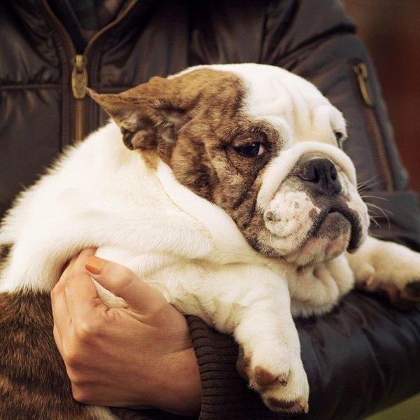 10 napak, ki jih delamo lastniki psov