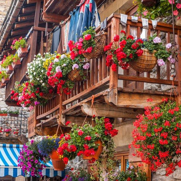 Katero cvetje nasaditi na balkon, teraso?