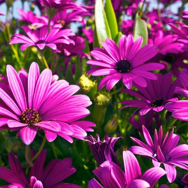 S temi cvetlicami bo vaš vrt resnično čudovit