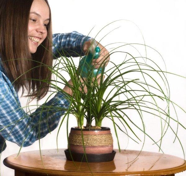 Kako skrbeti za sobne rastline pozimi?