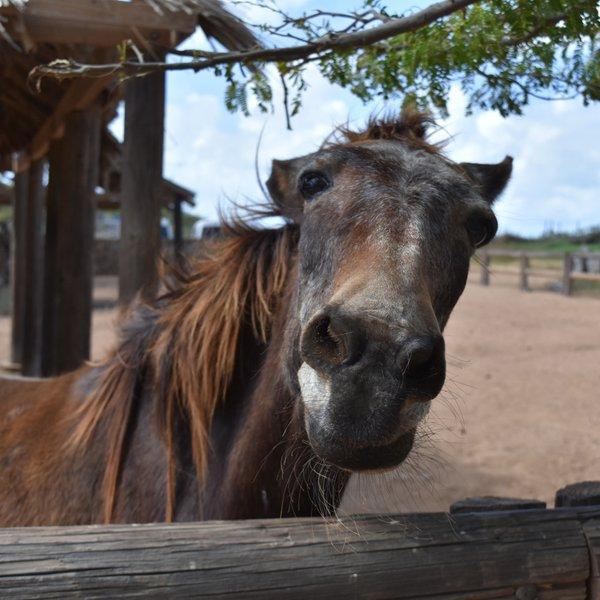 Posnetek konja zaokrožil po spletu in nasmejal ljudi