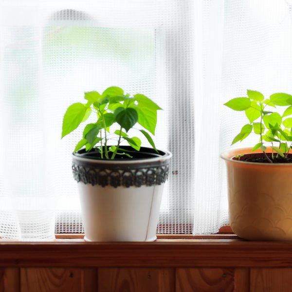 Na kakšen način rastline vplivajo na naše zdravje?