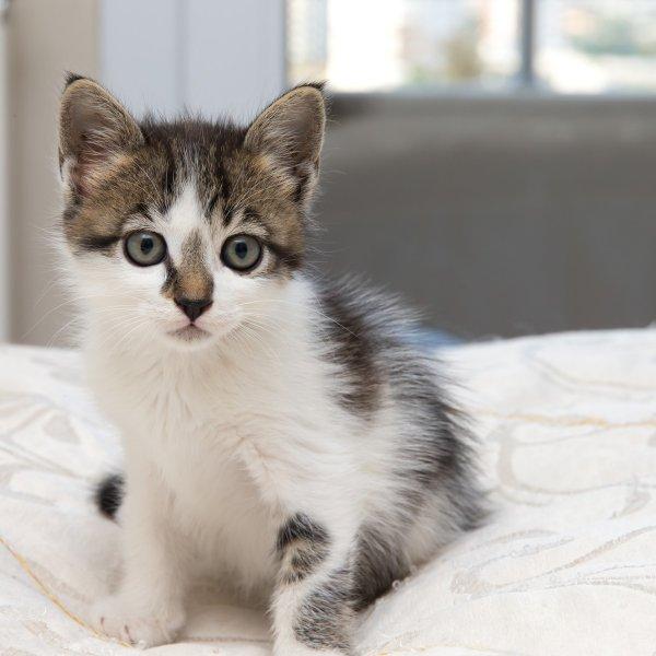 So mačke sposobne čustev?