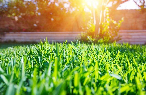 Sonce na travniku