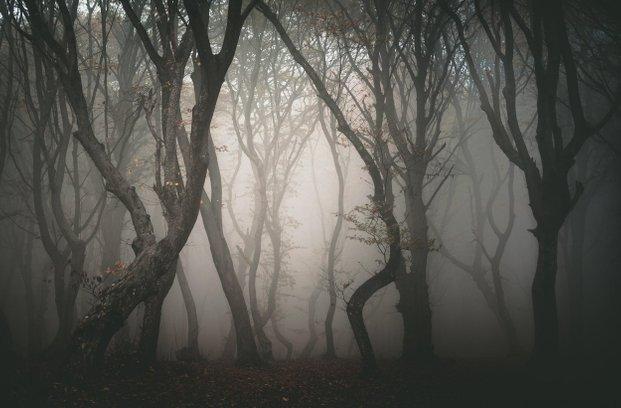 Skrivnostni gozd Hoia Baciu ali evropski Bermudski trikotnik