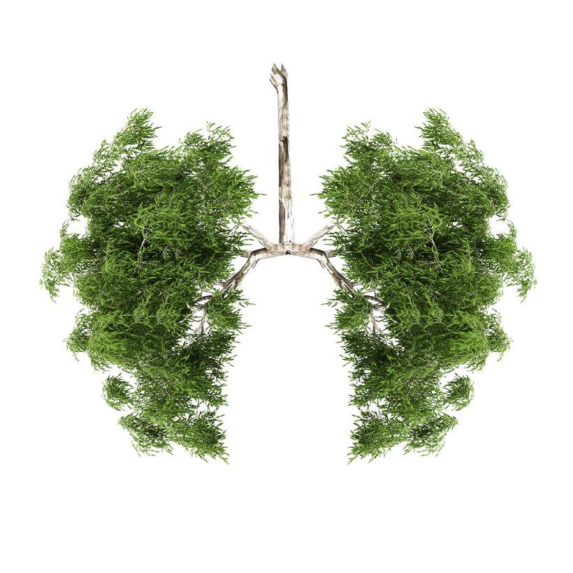 """""""Ljudje s svojim življenjskim slogom, ki zahteva veliko porabo virov, dodatno prispevamo k onesnaževanju zraka in globalnemu segrevanju,"""" pa so opozorili na ministrstvu za okolje in prostor."""