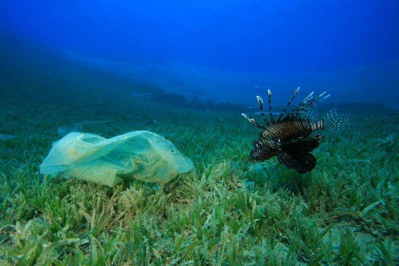 Ti odpadki ogrožajo morske živali, ki se ujamejo v večje kose plastike, manjše pa pogosto zamenjajo za hrano. Če zaužijejo plastične delce, pogosto ne morejo več prebavljati običajne hrane, zaradi česar poginejo.