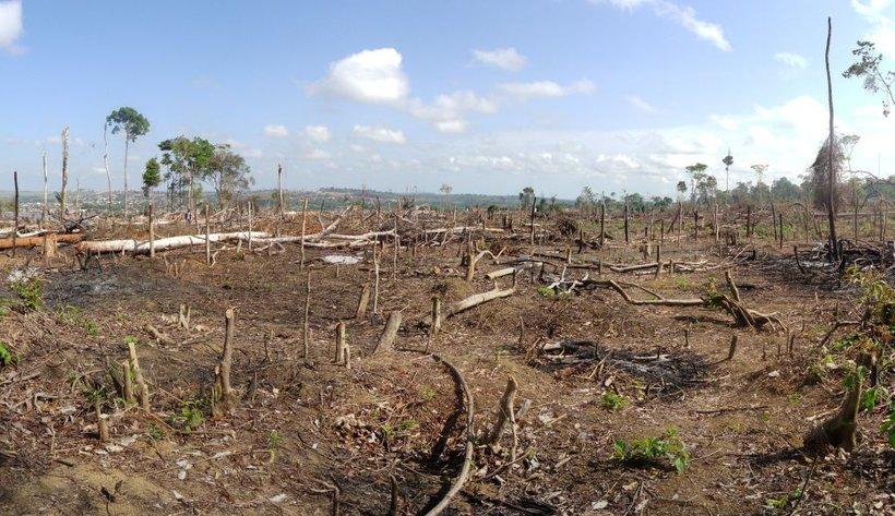 Človek je najbolj odgovoren za izgubo biotske raznovrstnosti.