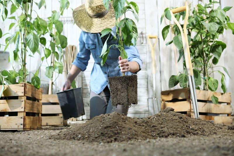 Ne prehitevajte z opravki na vrtu.
