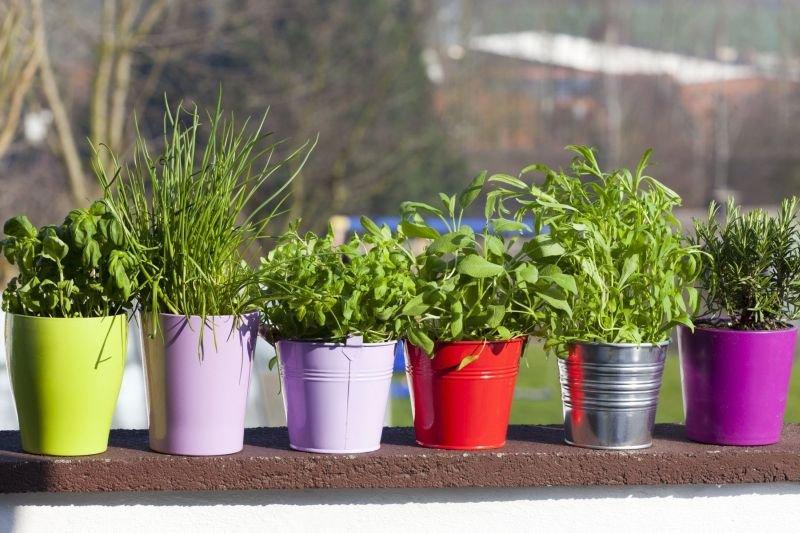 Uživajte ob pogledu na zelenje, ki bo krasilo vaš balkon ali okenske police.