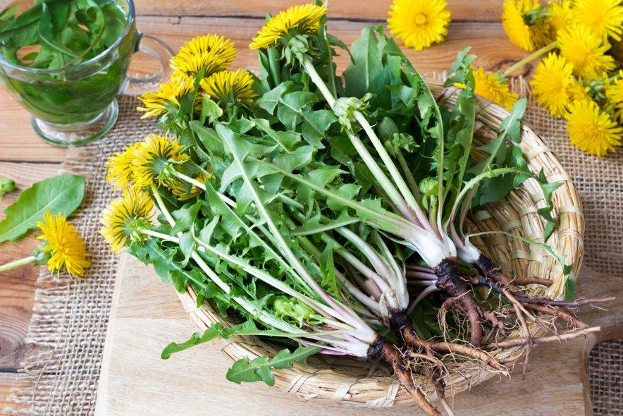 Pri regratu niso uporabni samo listi, ampak celotna rastlina.