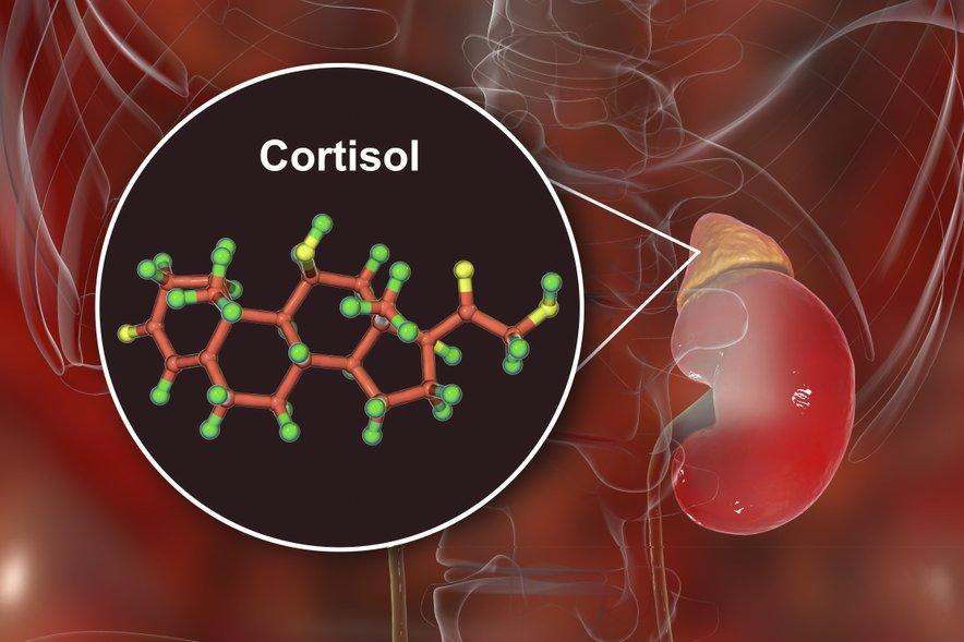 Ko smo pod stresom, se raven kortizola povečuje.