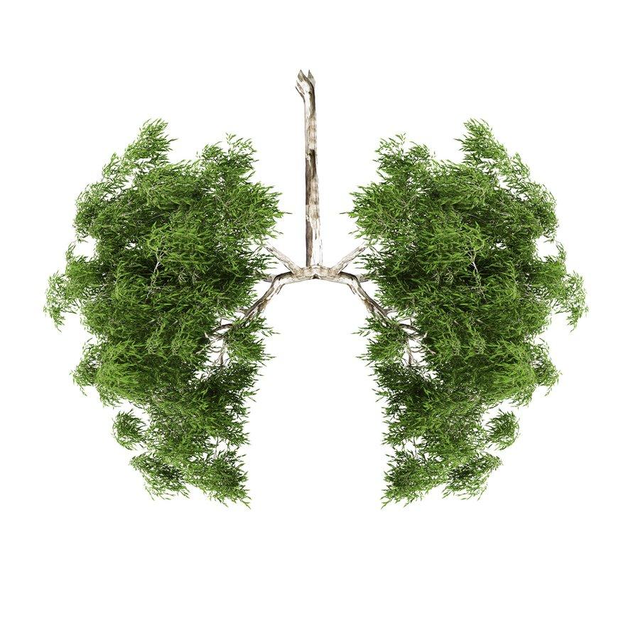 Znanstveniki, ki stojijo za študijo, sedaj zahtevajo bolj strogo regulacijo na področju onesnaževanja zraka in nevarnih PM2,5 delcev v zraku, ki pri vdihavanju prodrejo globoko v pljuča in v krvni obtok.