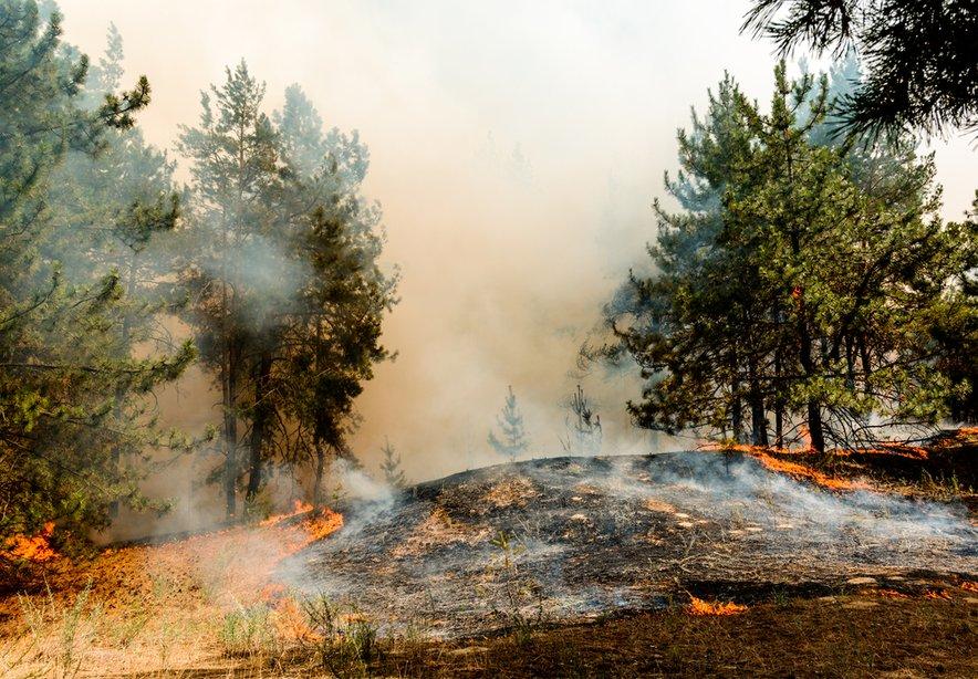 Od začetka leta so požari po navedbah okoljske organizacije Greenpeace v Sibiriji uničili več kot 13,4 milijona hektarjev gozdov.