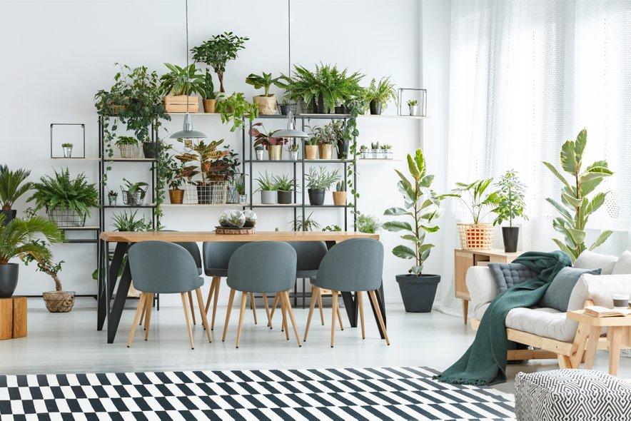 Sobne rastline - naj trend 2019