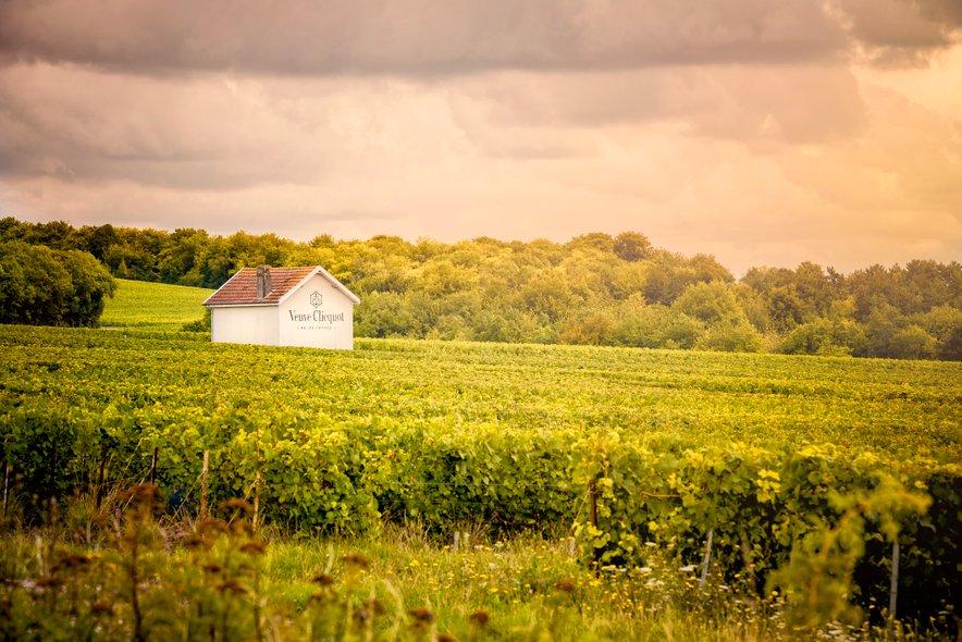 Nasadi trt v območju Champagne-Ardenne.