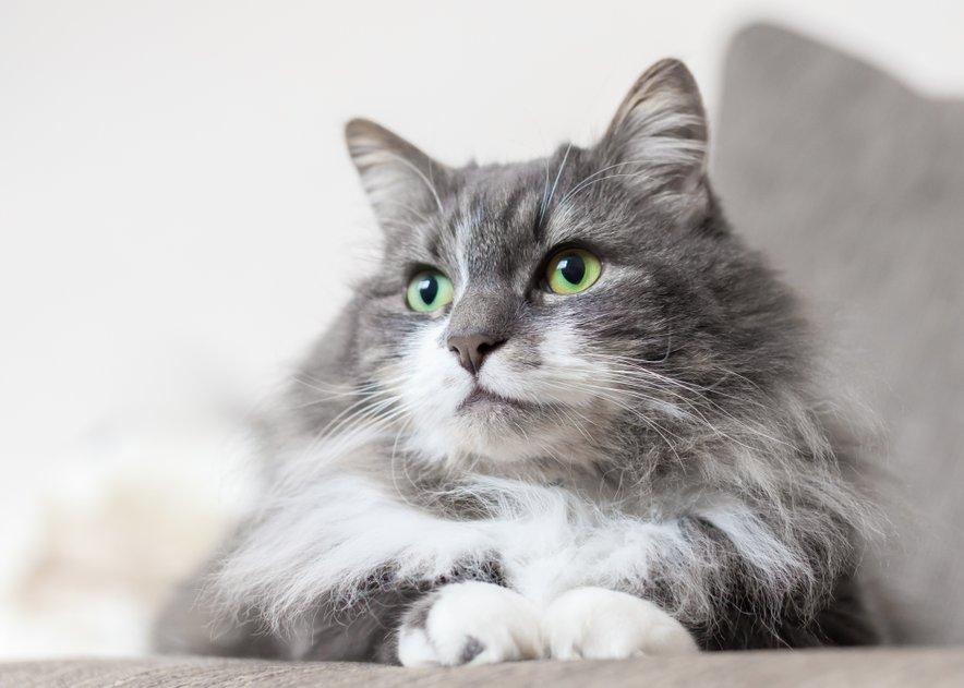 Mačke izražajo ljubezen z drgnjenjem glave, predenjem, direktnim in neprekinjenim očesnim stikom, grizljanjem in seveda s prinašanjem mrtvih miši.