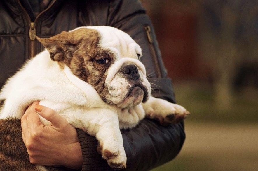 Debelost pri psih negativno vpliva na njihovo zdravstveno stanje.