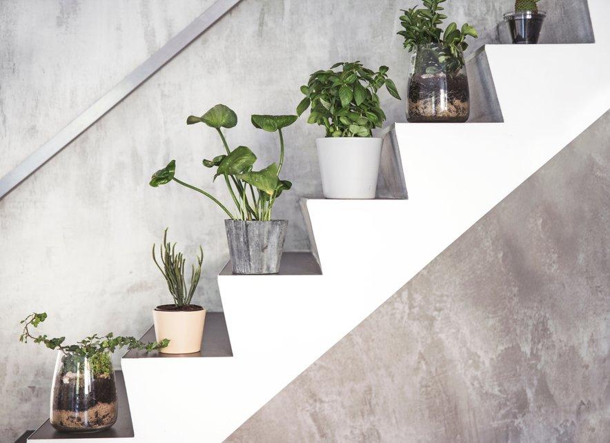 Namestite na stopnice takole lončnice.