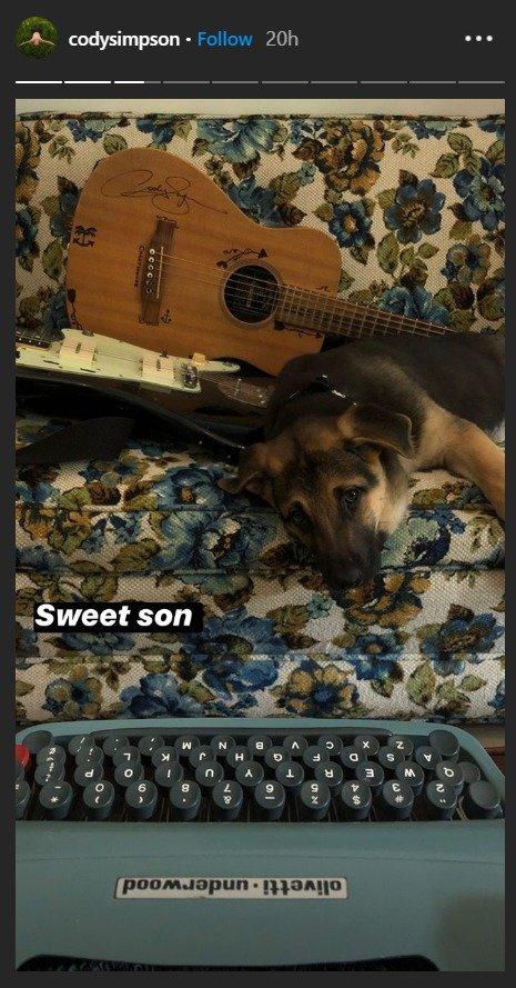Mladiček Codyju dela družbo tudi med pisanjem pesmi.