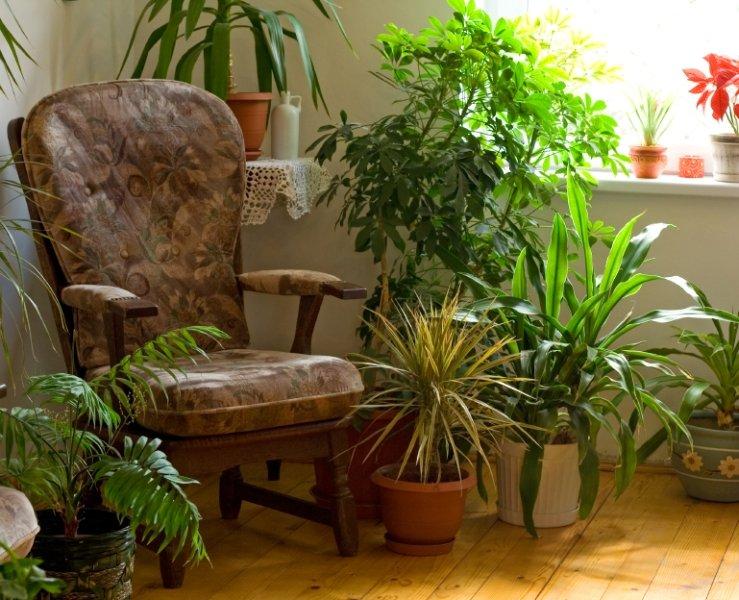 Sobne rastline - zeleni čistilci