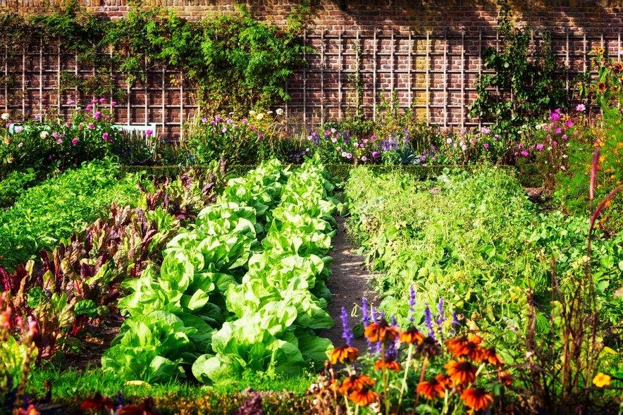 Pridelek na vrtu je odvisen ne le od našega truda; lahko nam namreč zagode vreme ali ga napadejo škodljivci.