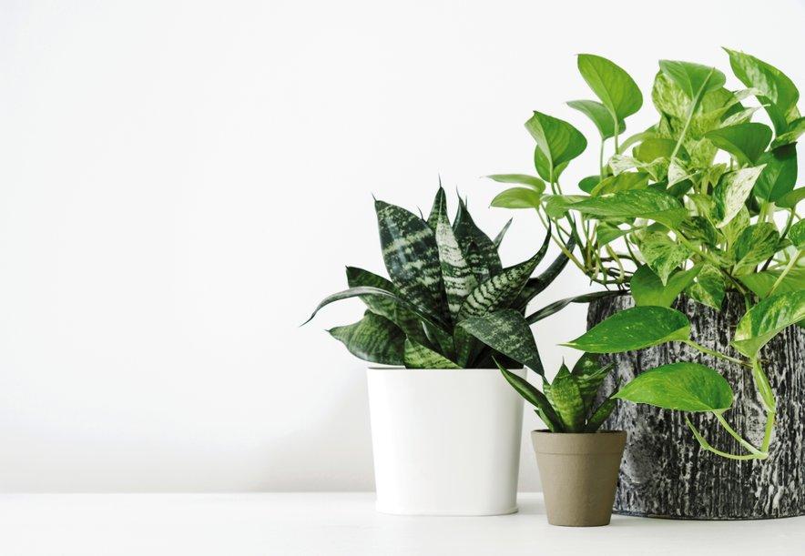 sobne rastline v kuhinji