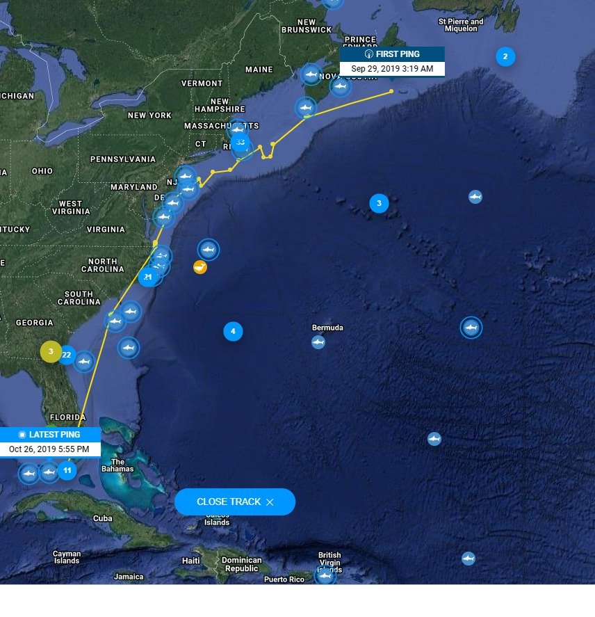 Morski psi v Atlantiku