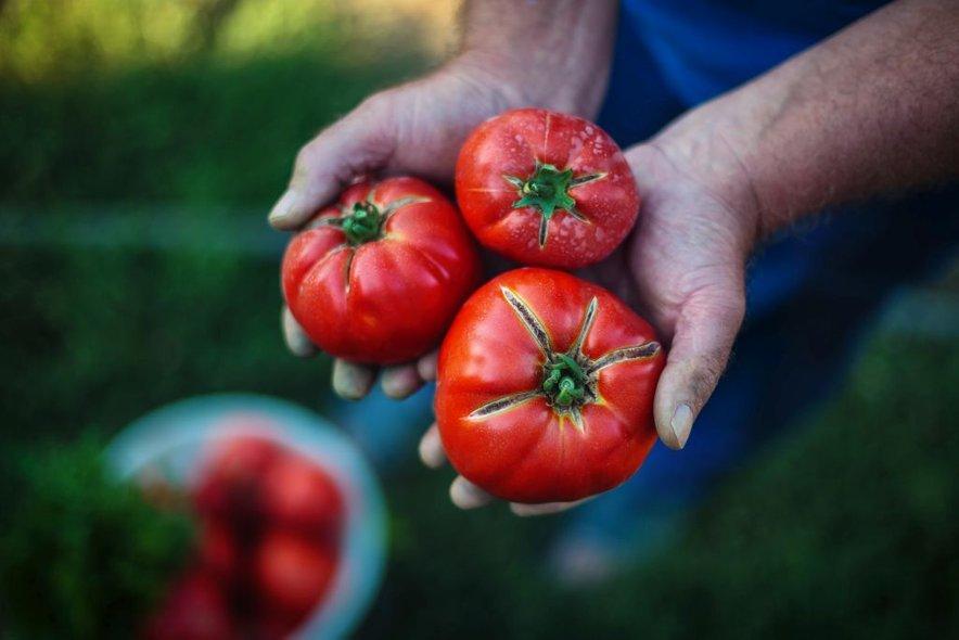 Glede na razširjenost pridelave vrtnin v svetu, je pridelava paradižnika na drugem mestu, takoj za sorodnim krompirjem.