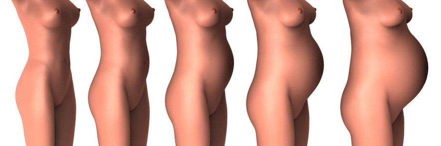 Stopnje nosečnosti. Trebušček počasi raste in tudi po porodu se telo počasi vrača v prejšnje stanje.