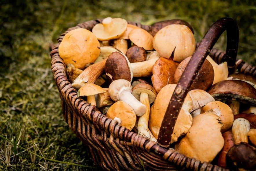 Kljub temu da so gobe zdrave in da je njihov okus za mnoge božanski, velja biti previden tako pri nabiranju kot tudi pri uživanju gob.