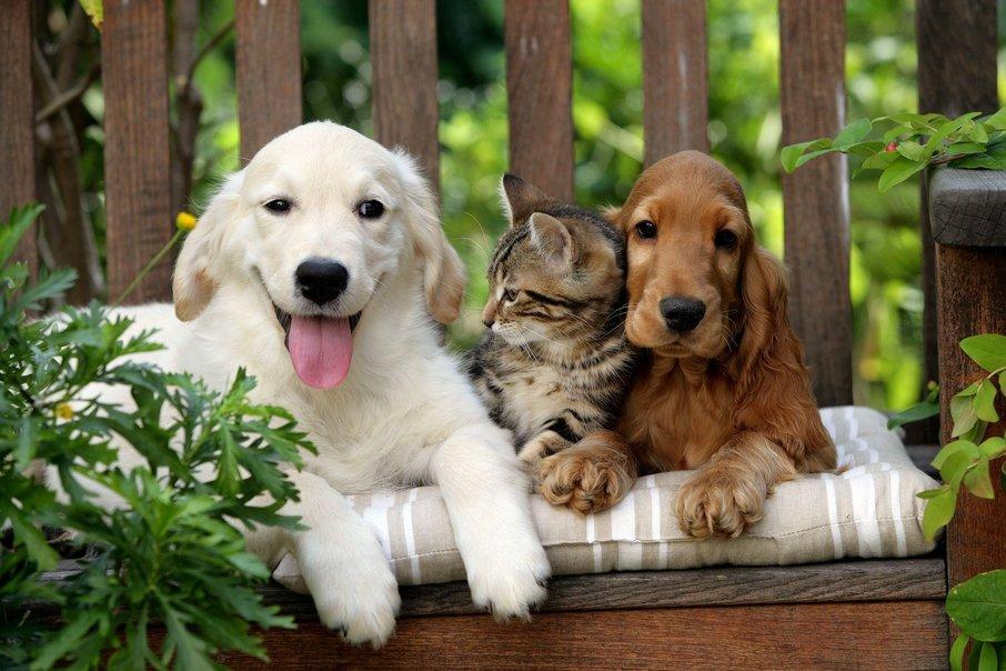 Pes in mačka.