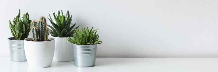 Rastline