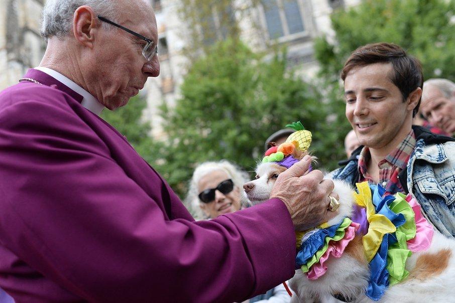 Vsakoletni blagoslov živali je v eni izmed newyorških cerkva dobro obiskan.