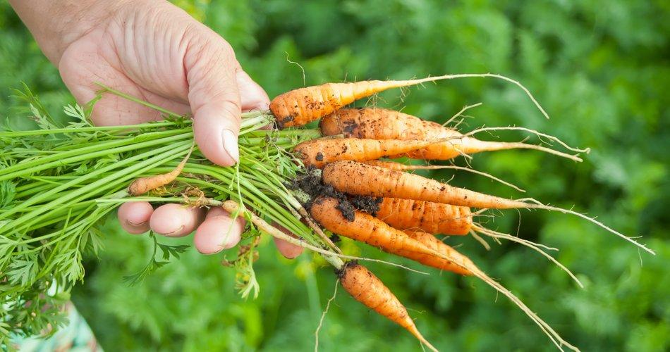 Prebivalec Slovenije je v 2020 porabil za prehrano povprečno 119 kg zelenjave