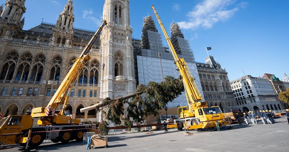 Dunajsko božično drevo kot simbol optimizma in povezanosti