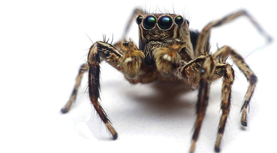 Zato vidimo doma vse več pajkov!
